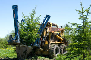 Landscape insurance liability