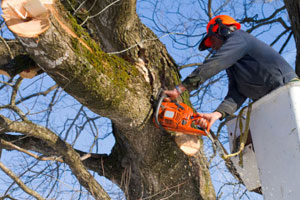 Tree trimming insurance
