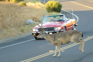 Recreational Driving Car Insurance